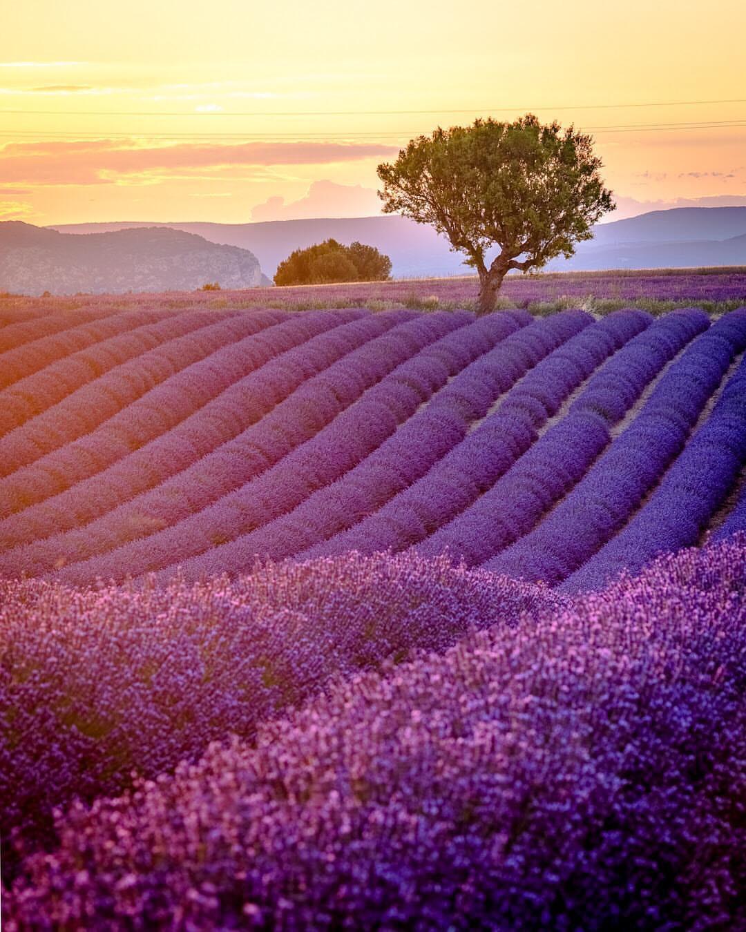 Lavender fields little french hearts Alexandra Dersidan bakemetoparis 2
