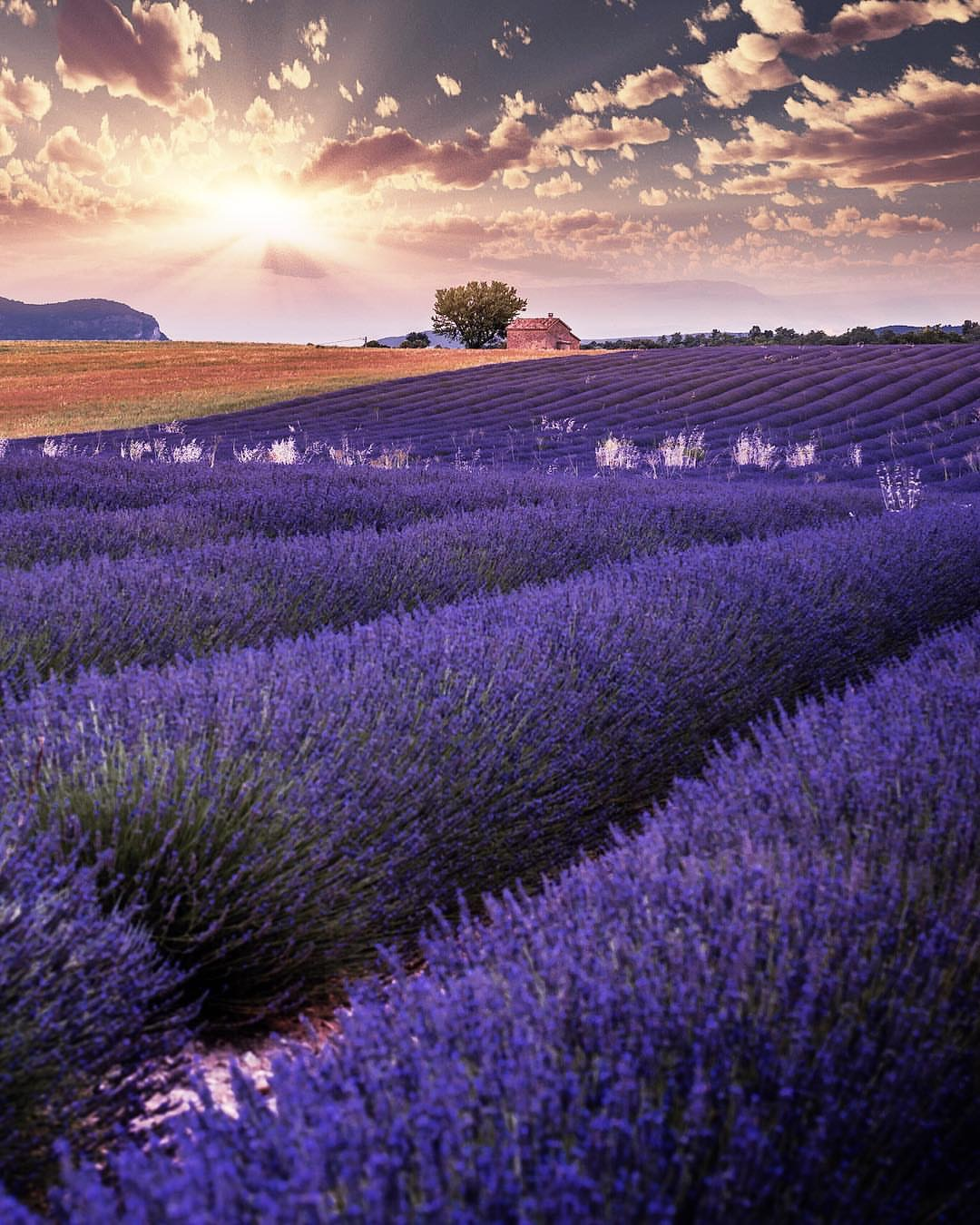 Lavender fields little french hearts Christofs70
