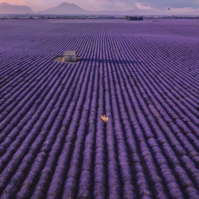 Lavender fields little french hearts vi66nya via hello_france